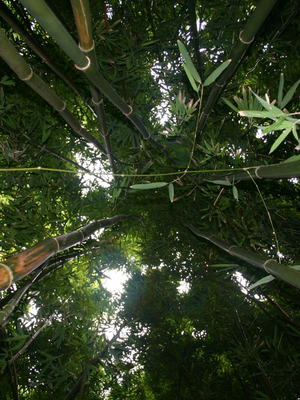 Pipiwai-Trail-Oheo-Haleakala-Park-Bamboo-Forest